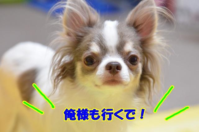 DSC_9497_20120914212614.jpg
