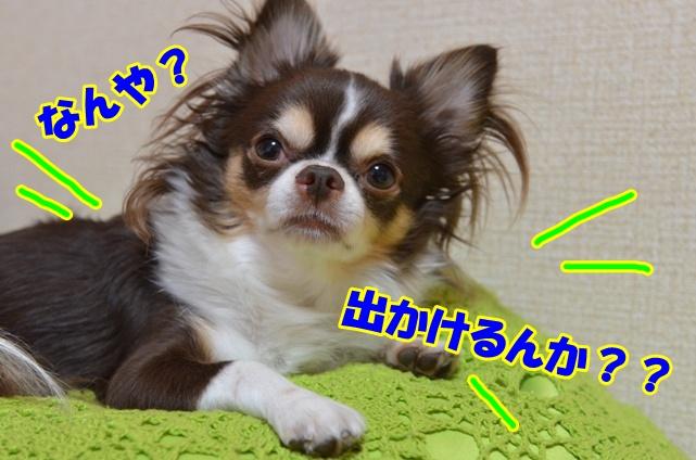 DSC_9499_20120914212614.jpg