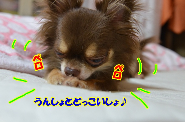 DSC_9546.jpg