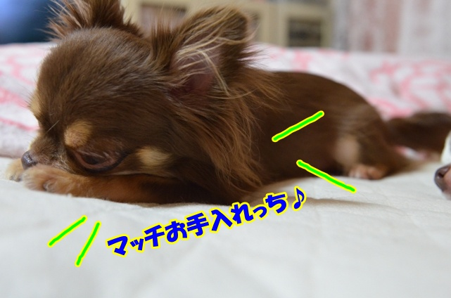 DSC_9548.jpg