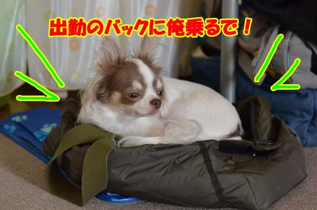 DSC_9557.jpg