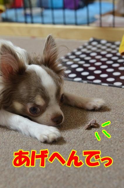 DSC_9572_20120909215222.jpg