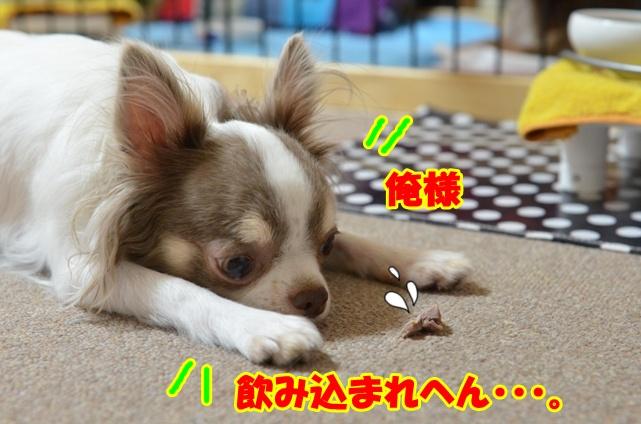 DSC_9573_20120909215222.jpg