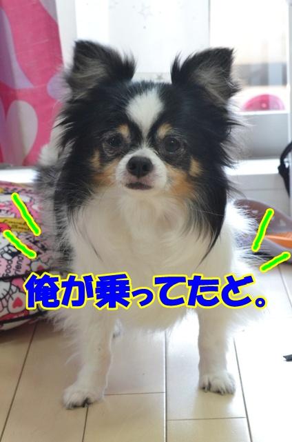 DSC_9825.jpg