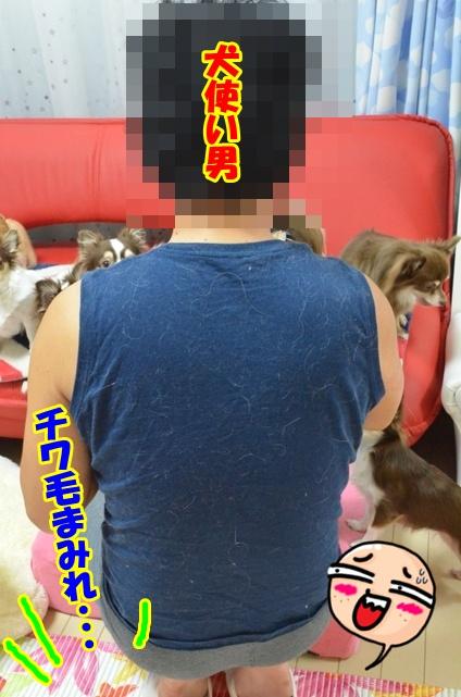 DSC_9941.jpg
