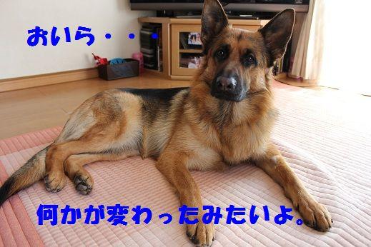 IMG_9005.jpg