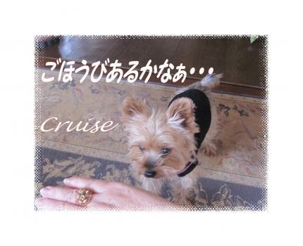 IMG_2692_convert_20121122190724.jpg