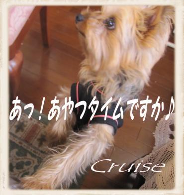 IMG_2714_convert_20121118183037.jpg