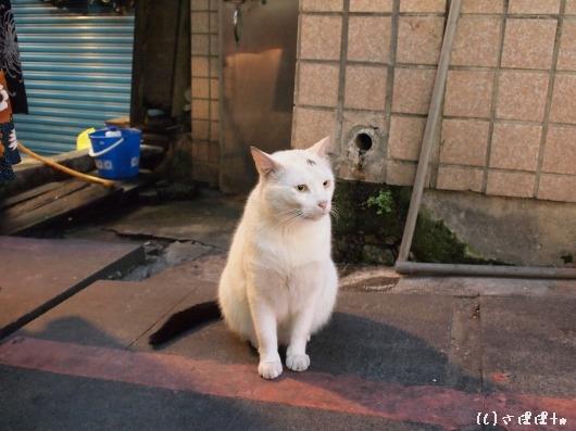 八里米血gao12
