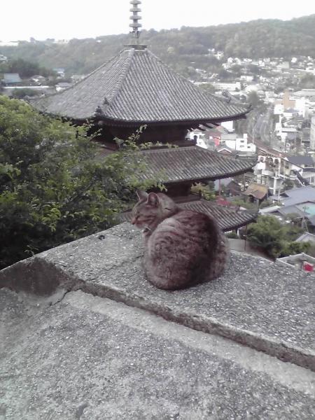 天寧寺三重塔と猫