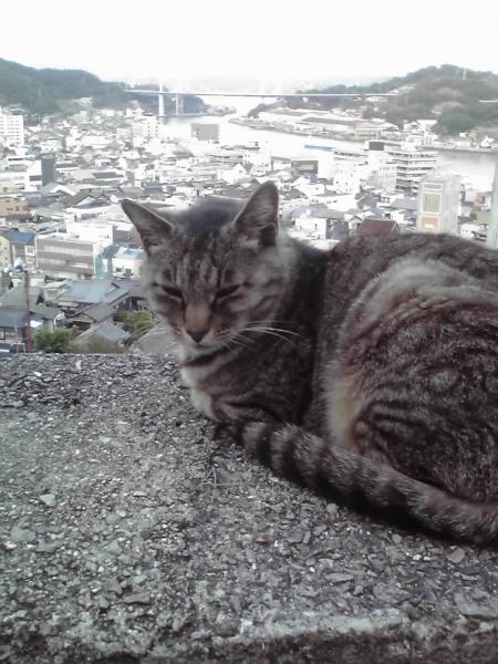 天寧寺三重塔と猫2