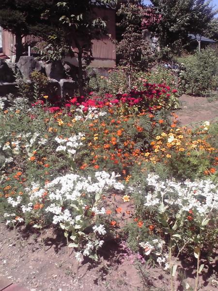 奈良沢、路傍の草花