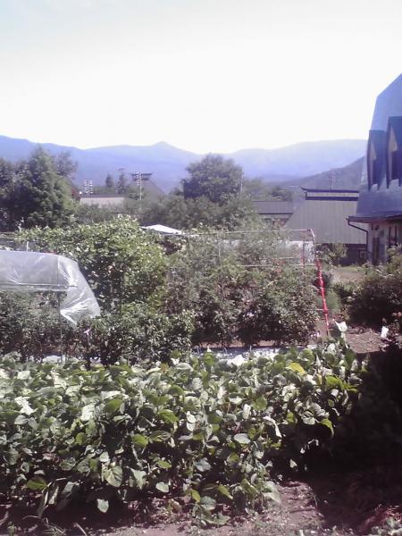 奈良沢、沿道の畑の広がり