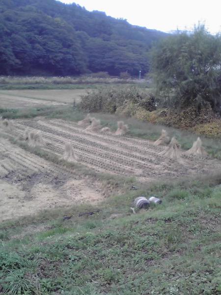 飯山風景4