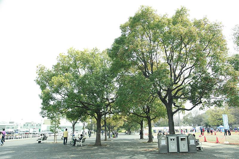 木のある風景_800_2