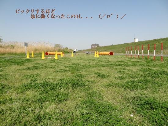 DSC00446.jpg
