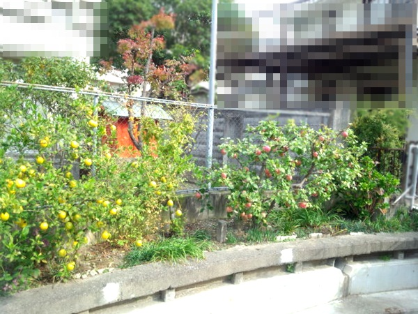 DSC_0468_20121128164525.jpg