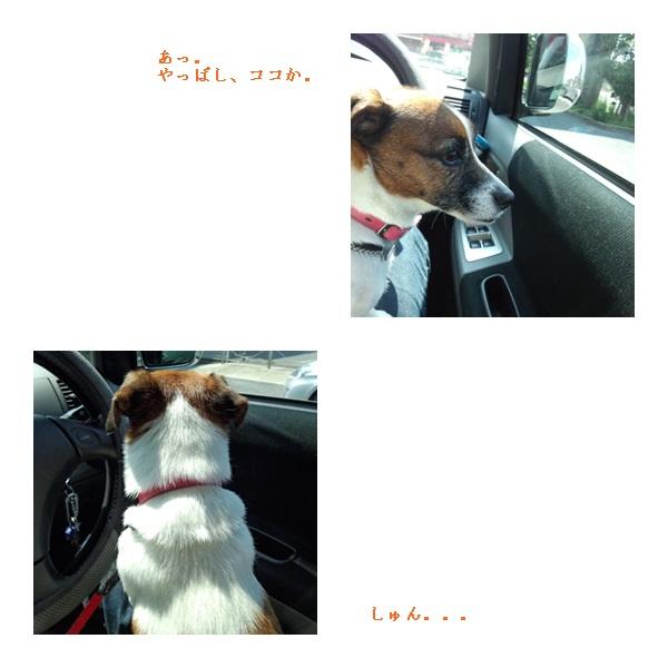 catsA_20120714141210.jpg