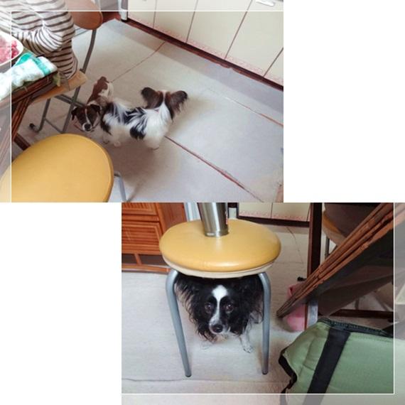 cats_20120427181817.jpg