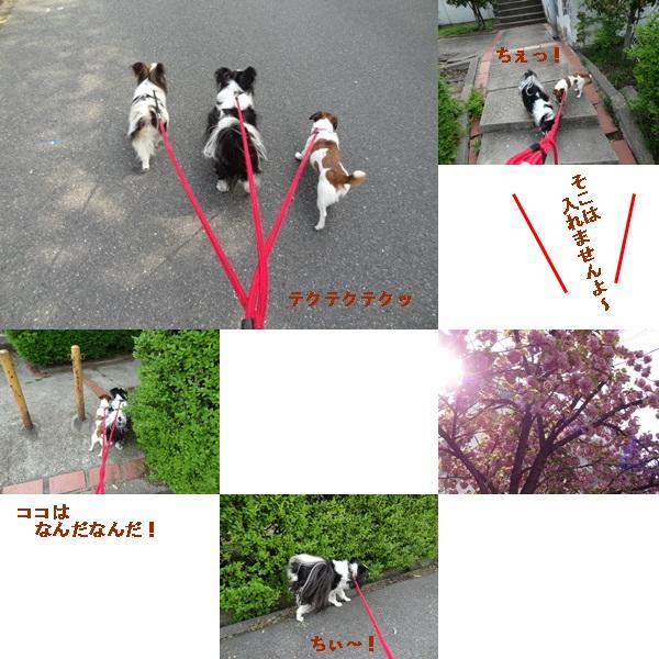 cats_20120428211844.jpg