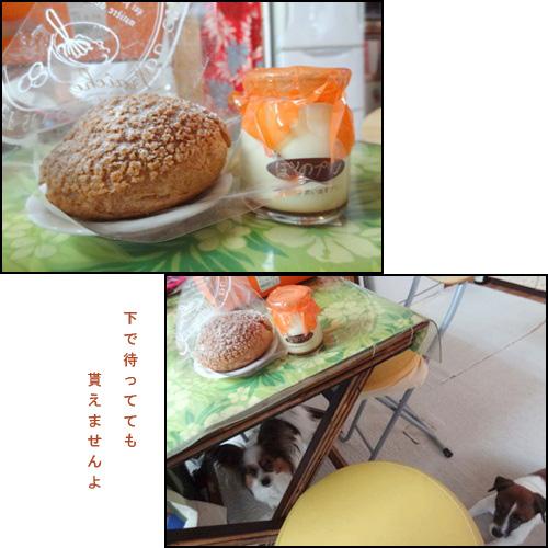 cats_20120501092227.jpg