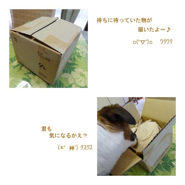 cats_20120501225223.jpg