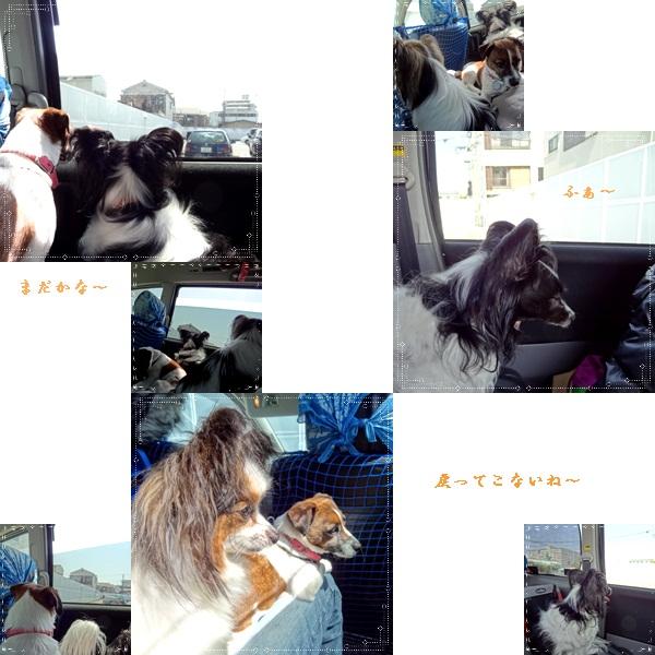 cats_20120508132943.jpg