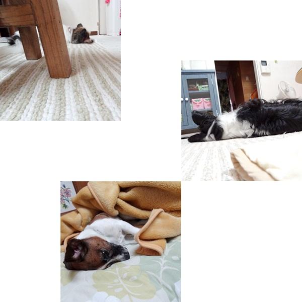 cats_20120616164053.jpg