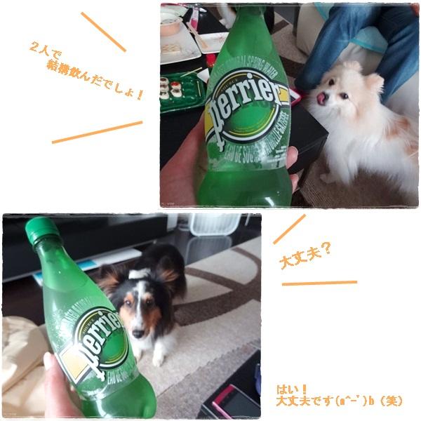 cats_20120626221314.jpg