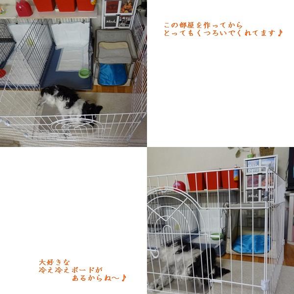 cats_20120715145519.jpg