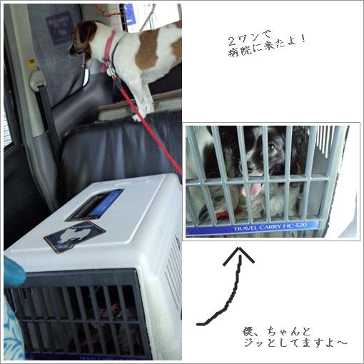 cats_20120722100408.jpg