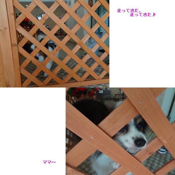 cats_20120822164736.jpg