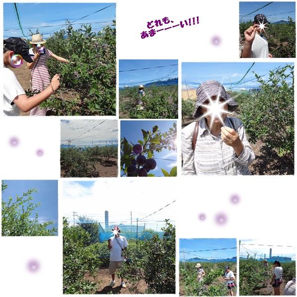 cats_20120831171208.jpg