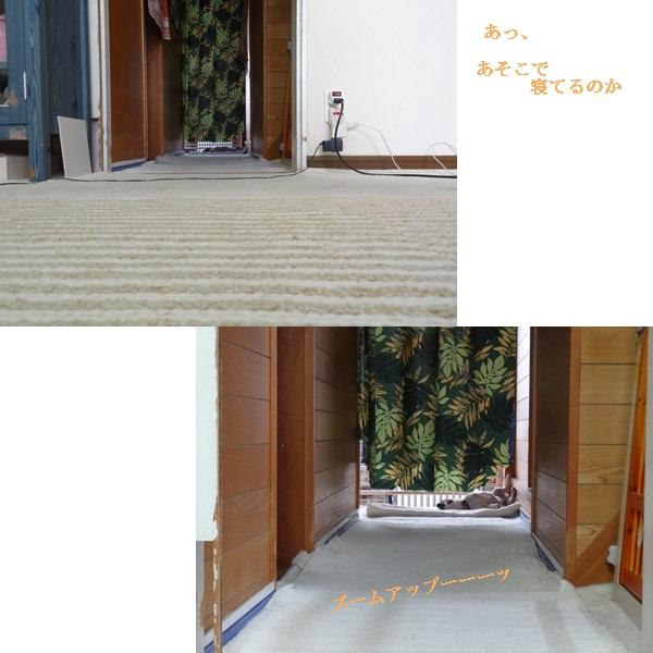 cats_20120919165513.jpg
