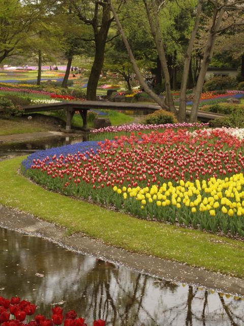 昭和記念公園20120422_123