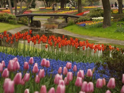 昭和記念公園20120422_103