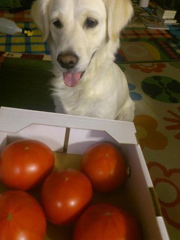 トマトをボールと間違えるジュディー