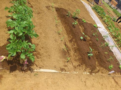3坪の農園