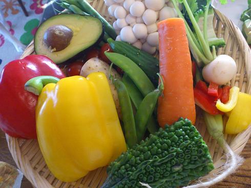 入門講座野菜色々