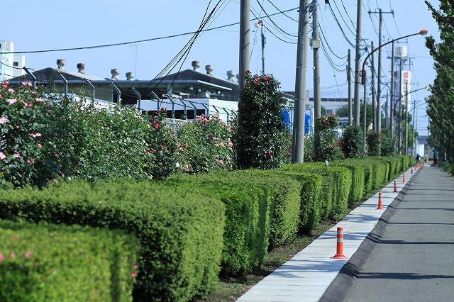 IMG_4648日本フルハウス