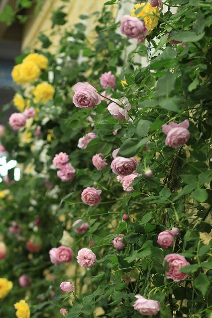 IMG_4745国際バラとガーデニングショウ