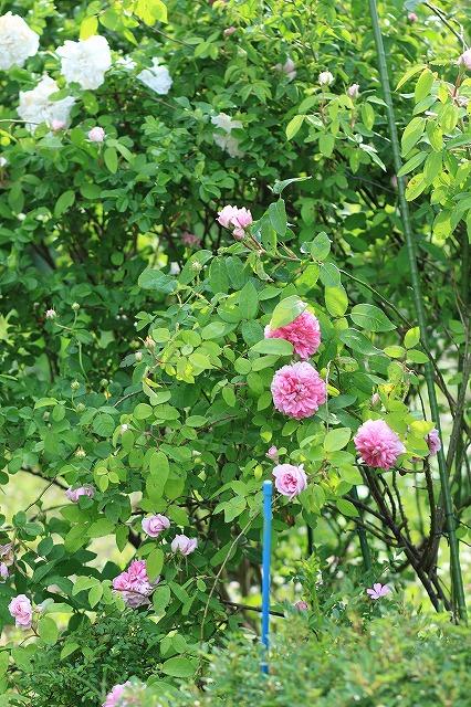 IMG_4916あっちゃんのお庭