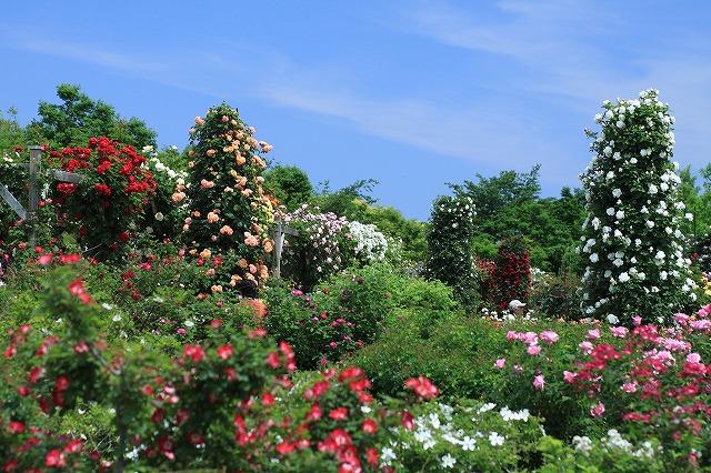 IMG_5539河津バガテル公園