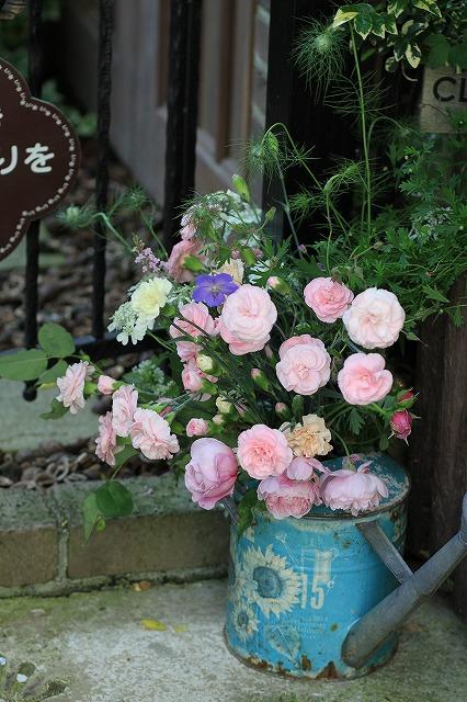 IMG_6370乙姫ガーデン