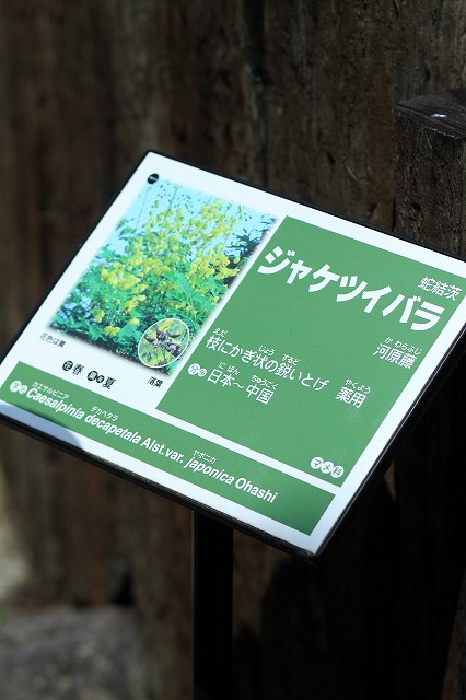 IMG_6694強羅公園