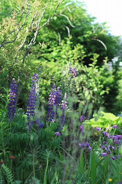 IMG_8395実家の庭