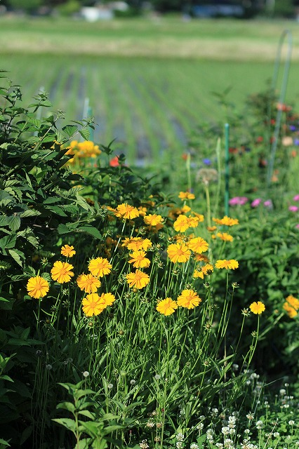 IMG_8399実家の庭