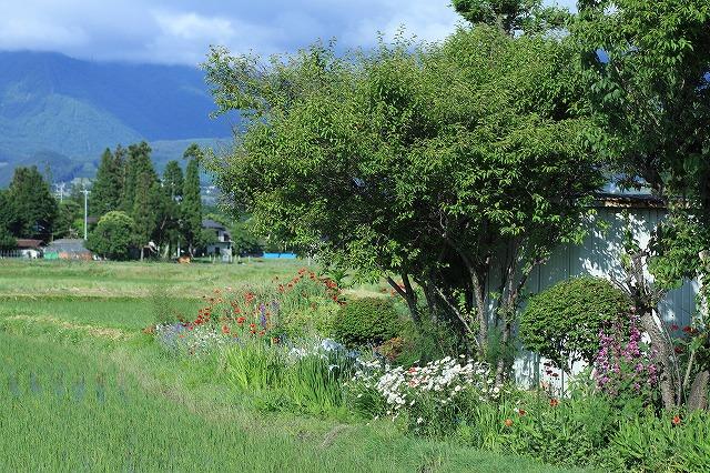 IMG_8467実家の庭