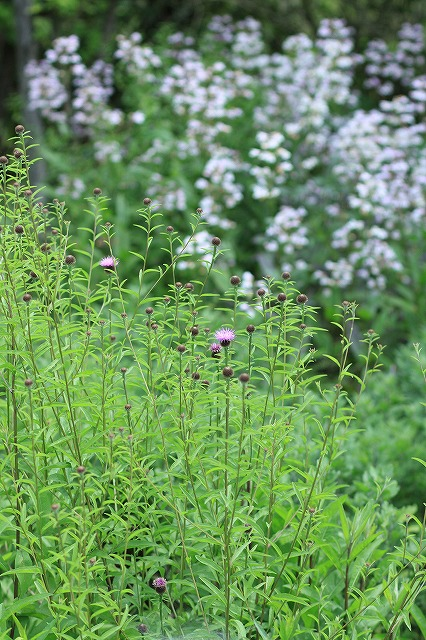 IMG_9696那須花と体験の森