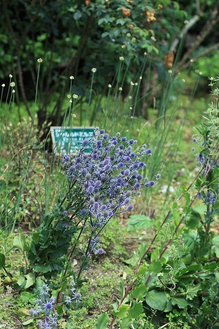 IMG_9705那須花と体験の森